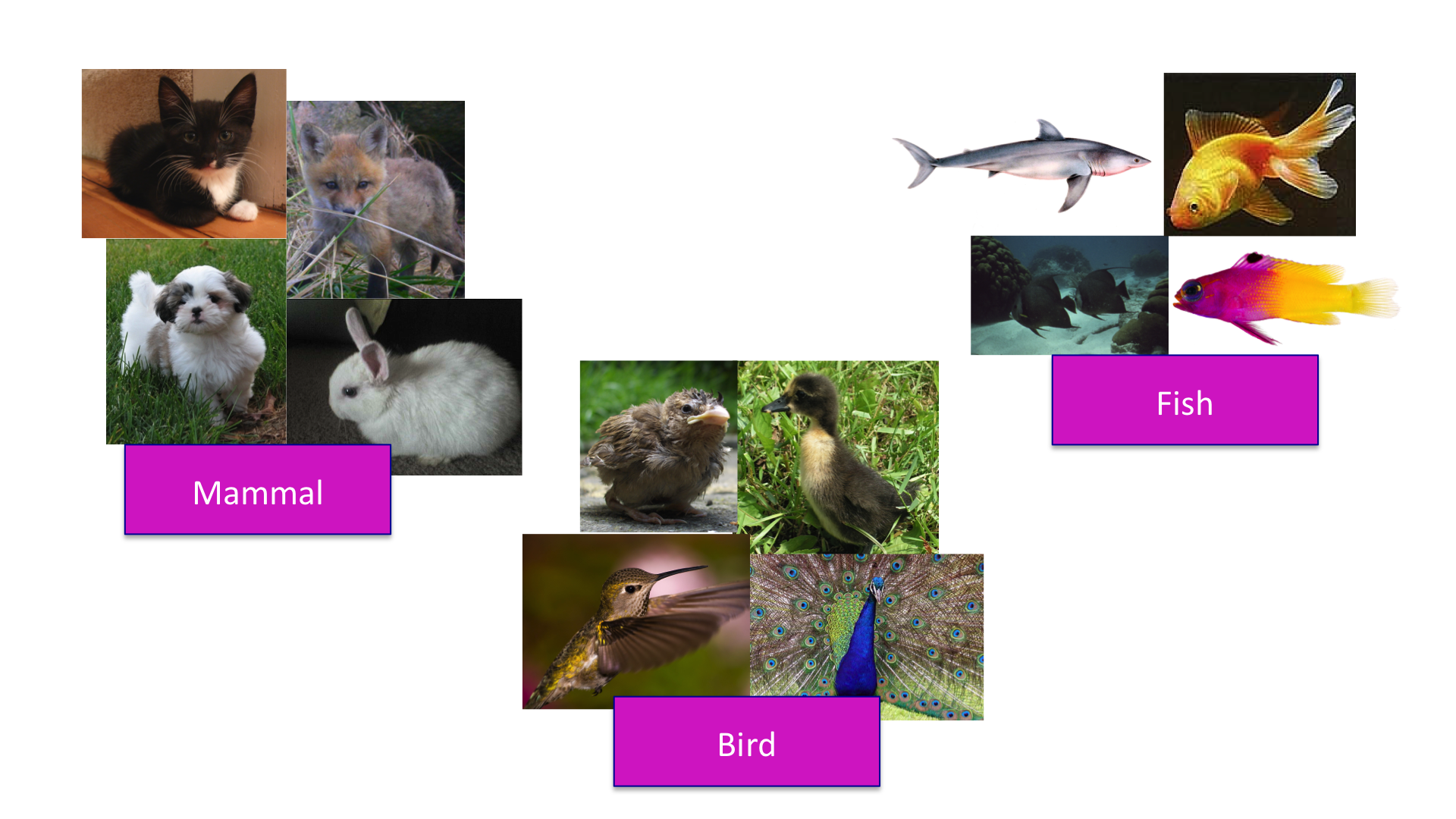Clustering of animals